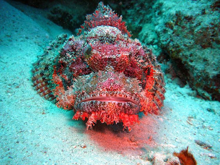 L'Egitto riparte dalla subacquea: il debutto a Eudishow - Webitmag - Web in Travel Magazine