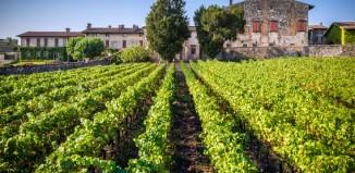 Le vigne Berlucchi. Foto: Antonio Saba